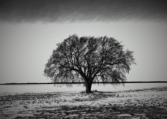 Favorite Tree Greeting Card featuring the photograph Everybody Has One by Curtis Tilleraas