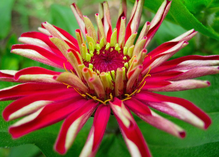 Exotic Greeting Card featuring the photograph Exotic Flower by Shreeharsh Ambli