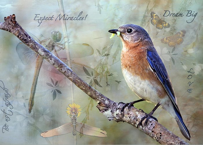 Expect Miracles Greeting Card featuring the photograph Expect Miracles by Bonnie Barry