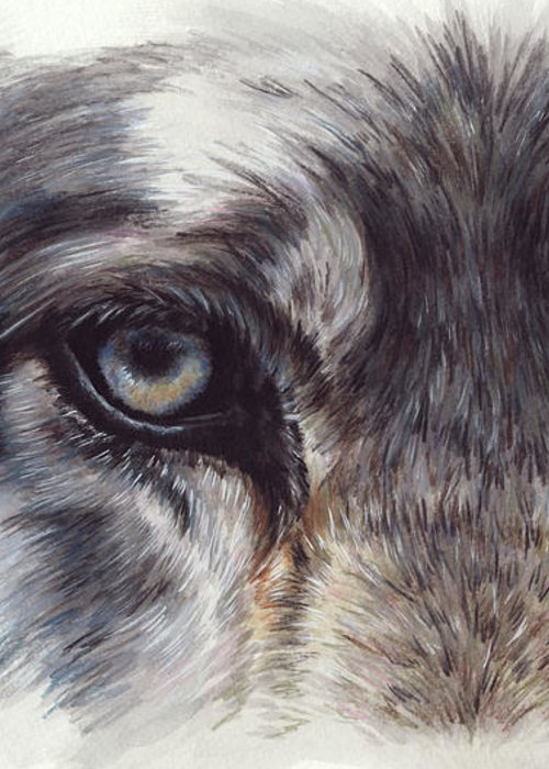 Wolf Greeting Card featuring the painting Eye-catching Wolf by Barbara Keith