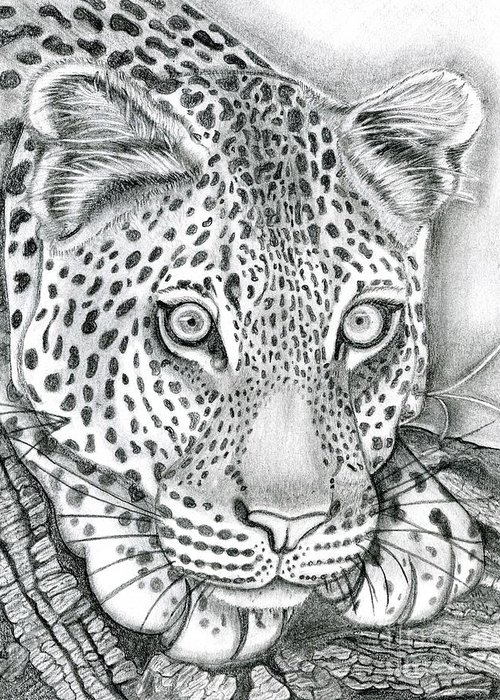 Leopard Greeting Card featuring the drawing Eye To Eye by Robert Wilson