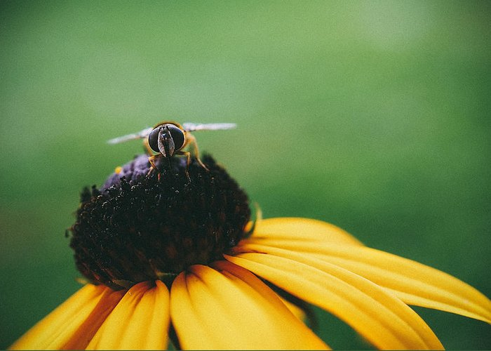 Macro Greeting Card featuring the photograph Face of a Bee by Tracy Jade