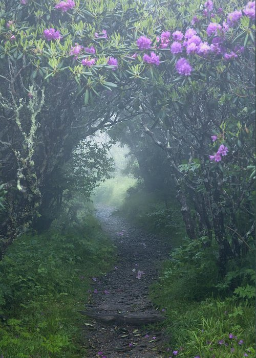 Fairy Path Greeting Card featuring the photograph Fairy Path by Rob Travis