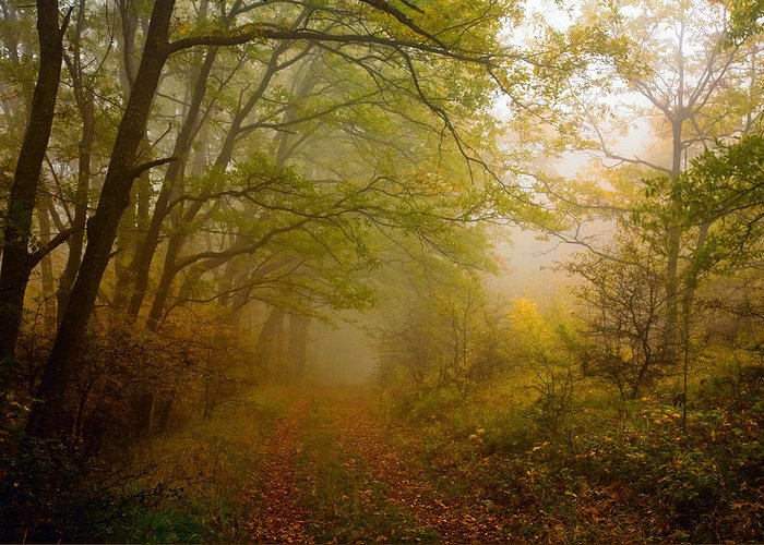 Mountain Greeting Card featuring the photograph Fairy Wood by Evgeni Dinev