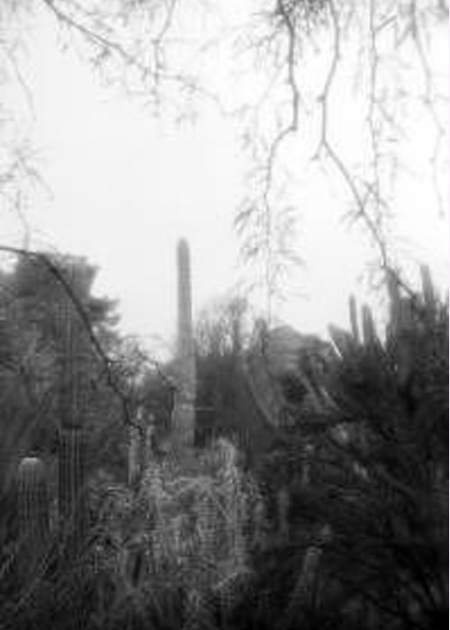 Cactus Greeting Card featuring the photograph Fairytale Saguaro by Kevin Igo