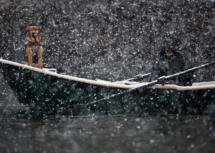 Dog Greeting Card featuring the photograph Faith In Snow Ka653 by Yoshiki Nakamura