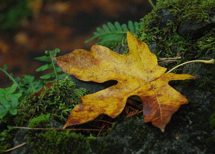 Foliage Greeting Card featuring the photograph Fall Alone by Lori Mellen-Pagliaro
