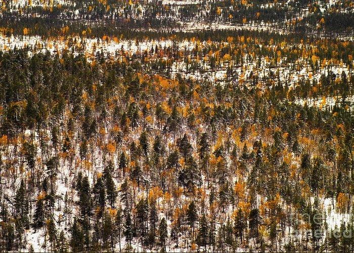 Finnish lapland art fine art america finnish lapland greeting cards m4hsunfo