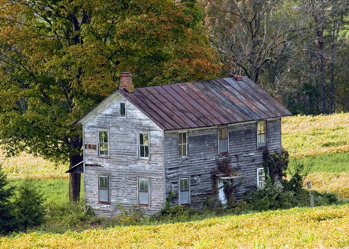 Trees Greeting Card featuring the photograph Fall At The Forgotten Farmhouse by Gene Walls
