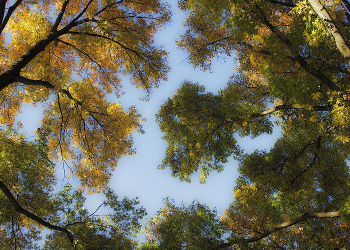 Fall Greeting Card featuring the photograph Fall Canopy In Virginia by Teresa Mucha