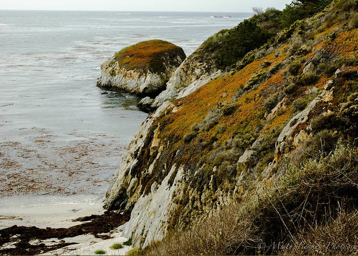 Fall Colors Engulf The Seaside Cliff At Point Lobos State Park Greeting Card featuring the photograph Fall Cliff by Misty Tienken