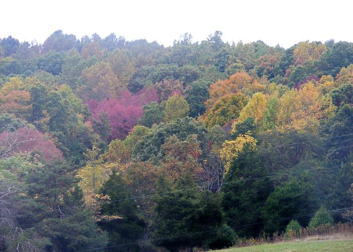 Fall Greeting Card featuring the photograph Fall Colors In Rockbridge County by Eddie Armstrong