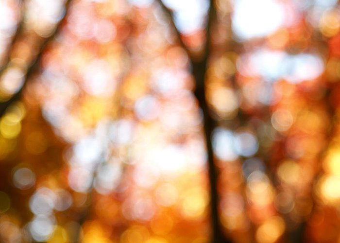 Abstract Greeting Card featuring the photograph Fall Colors by Les Cunliffe