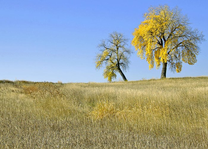 Fall. Blue. Sky. Weeds. Yellow. Grass. Fields. Water. Rain. Clouds.fall Colors Photography. Mixed Media. Mixed Media Photography. Mixed Media Fall Colors. Fine Art Fall Colors. Colorado Fall Colors. Fall Greeting Cards. Yellow Fall Color Photography. Fall Colors In Fort Collins Co. Gallery Fine Art Photography. Fall Landscape Photography. Greeting Card featuring the photograph Fall Days In Fort Collins Co by James Steele