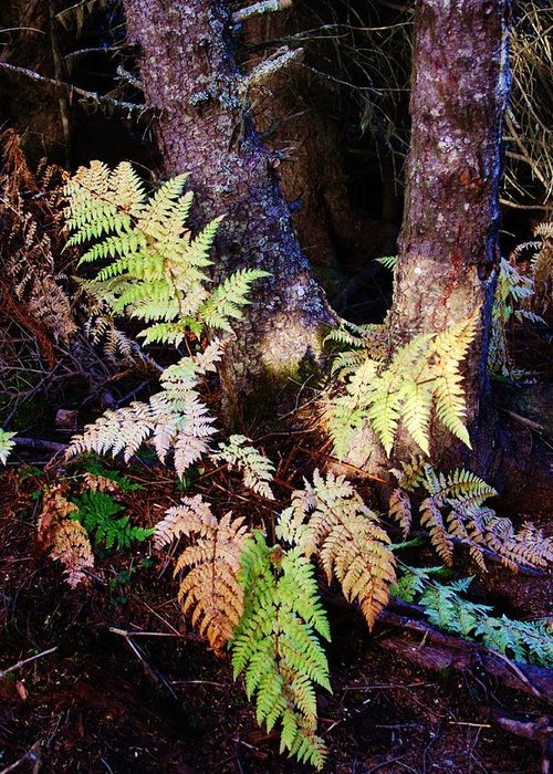 Alaskan Ferns In Autumn Greeting Card featuring the photograph Fall Ferns by Lori Mahaffey