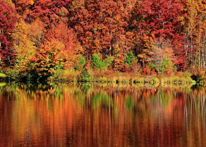 Fall Greeting Card featuring the photograph Fall Foliage by Ronda Ryan