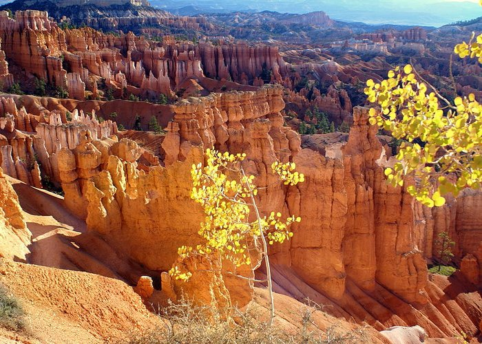 Bryce Canyon National Park Greeting Card featuring the photograph Fall In Bryce Canyon by Marty Koch