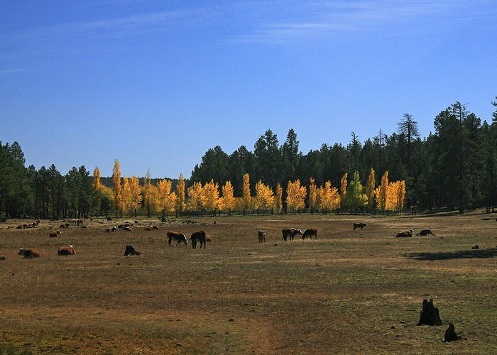 Landscape Greeting Card featuring the photograph Fall In Line by Randy Oberg