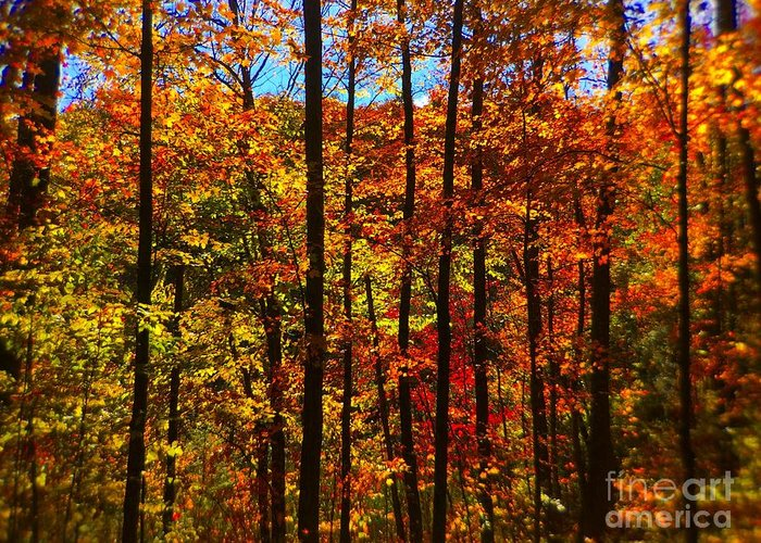Barbara Griffin Greeting Card featuring the photograph Fall In Ontario Canada by Barbara Griffin