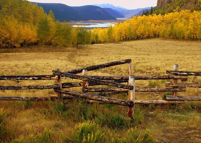 Fall Colors Greeting Card featuring the photograph Fall In The Rockies 2 by Marty Koch
