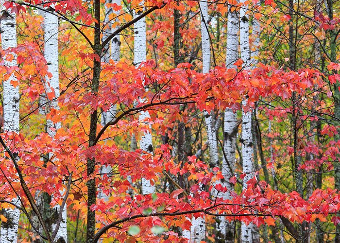 Minnesota Greeting Card featuring the photograph Fall Layers by Adam Pender