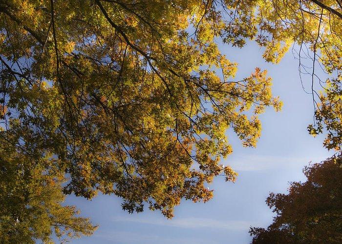 Fall Greeting Card featuring the photograph Fall Magic by Teresa Mucha