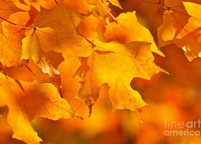 Fall Greeting Card featuring the photograph Fall Maple Leaves by Elena Elisseeva