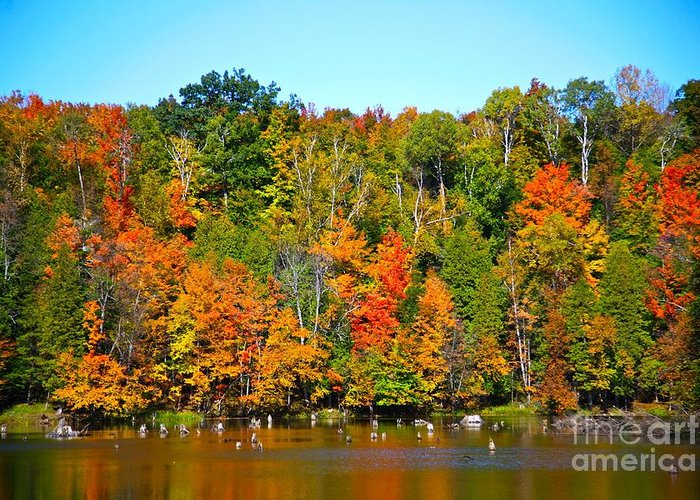 Fall Greeting Card featuring the photograph Fall On The Water by Robert Pearson