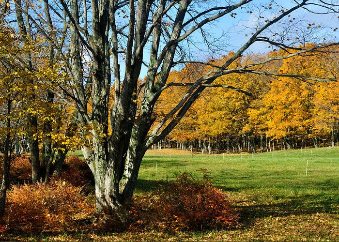 Trees Greeting Card featuring the photograph Fall Pasture by Tim Nyberg