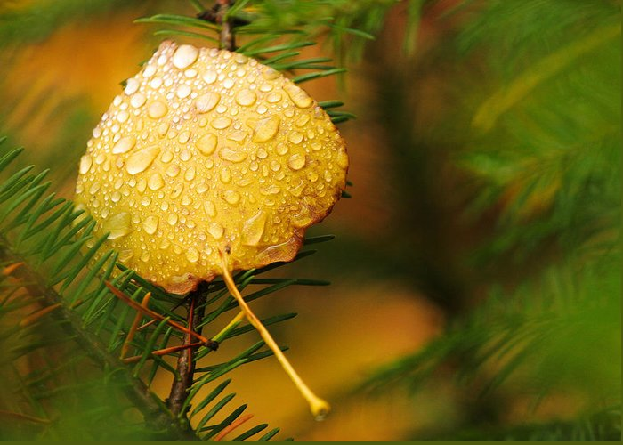 Fall Greeting Card featuring the photograph Fall Raindrops by Adam Pender