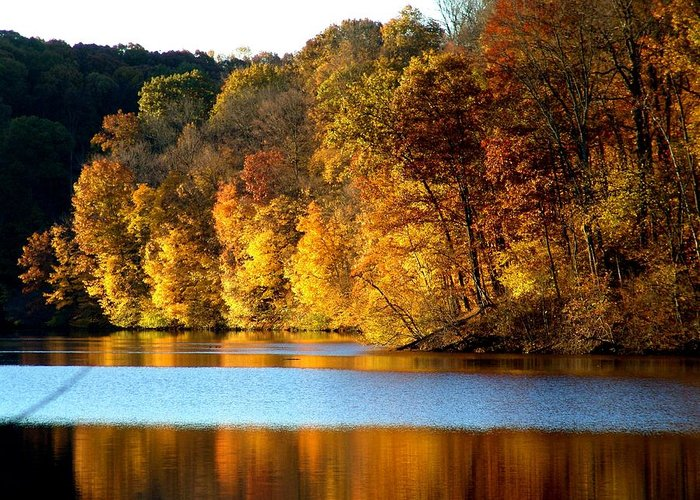 Trees Greeting Card featuring the photograph Fall Reflections Of Indiana by Carol Milisen