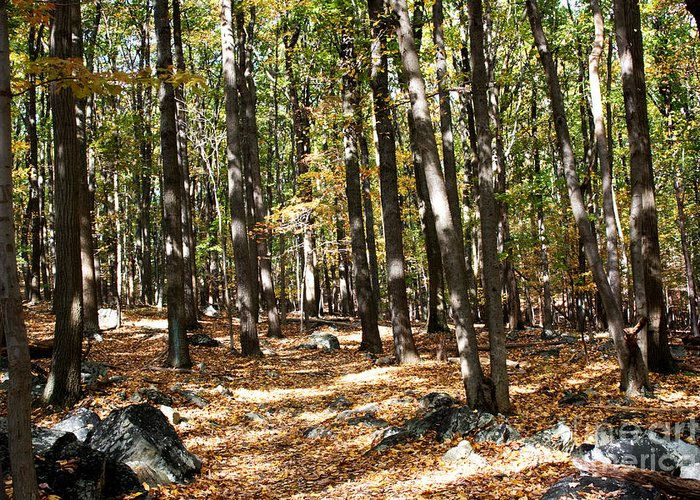 Fall Season Greeting Card featuring the photograph Fall Season Woods by Robin Lynne Schwind