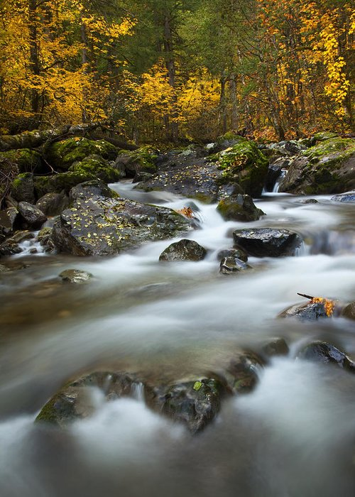 Stream Greeting Card featuring the photograph Fall Surge by Mike Dawson