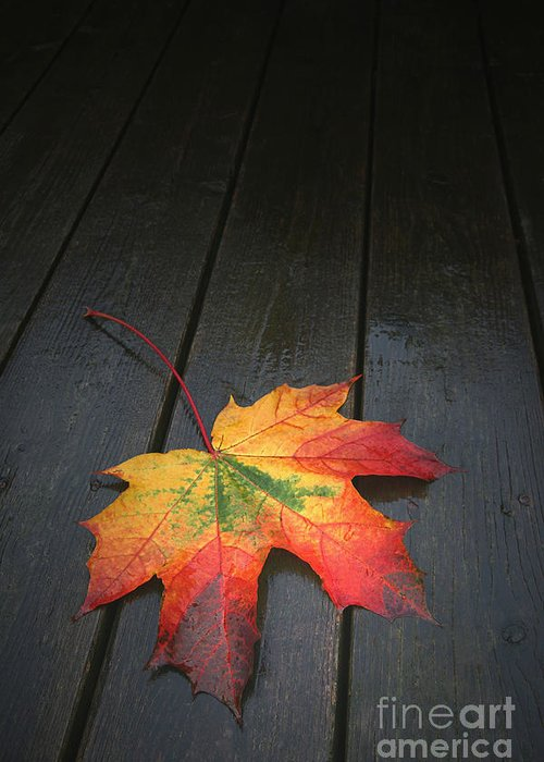 Leaf Autumn Fall Rain Color Greeting Card featuring the photograph Fall by Winston Rockwell