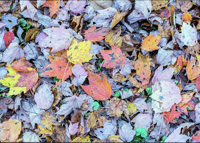 Leaves Greeting Card featuring the photograph Fallen Leaves by Cris Ritchie