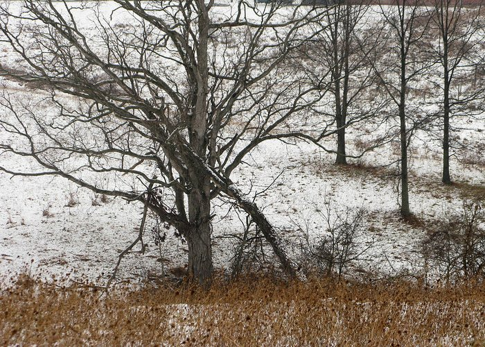 Tree Greeting Card featuring the photograph Fallen by Martie DAndrea