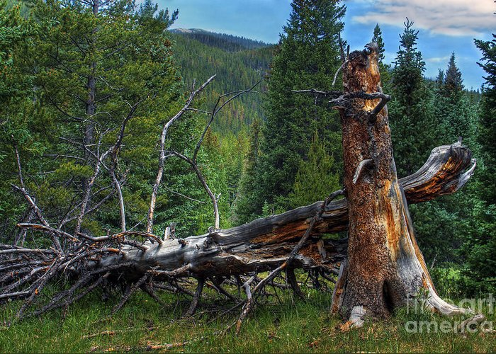Landscape Greeting Card featuring the photograph Fallen Tree by Pete Hellmann