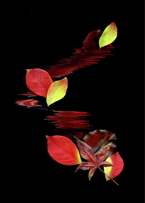 Abstract Art Greeting Card featuring the photograph Falling Leaves by Gerlinde Keating - Galleria GK Keating Associates Inc