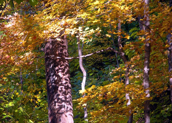 Fall Trees Greeting Card featuring the photograph Falls Splendor by John Lautermilch