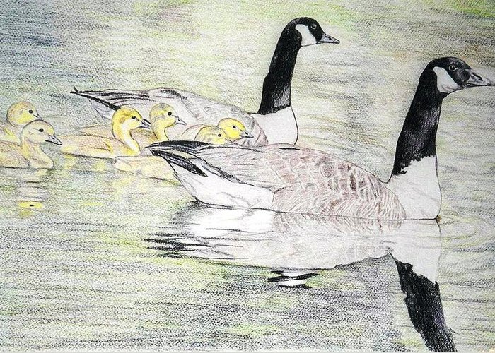 Canadian Geese Greeting Card featuring the drawing Family Outing by Debra Sandstrom