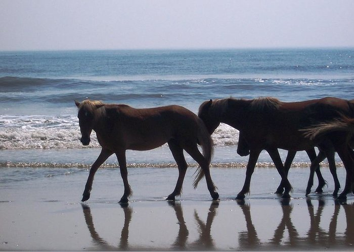 Horses Greeting Card featuring the photograph Family Stroll by James and Vickie Rankin