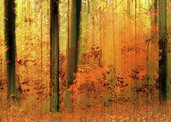 Autumn Greeting Card featuring the photograph Fanciful Forest by Jessica Jenney