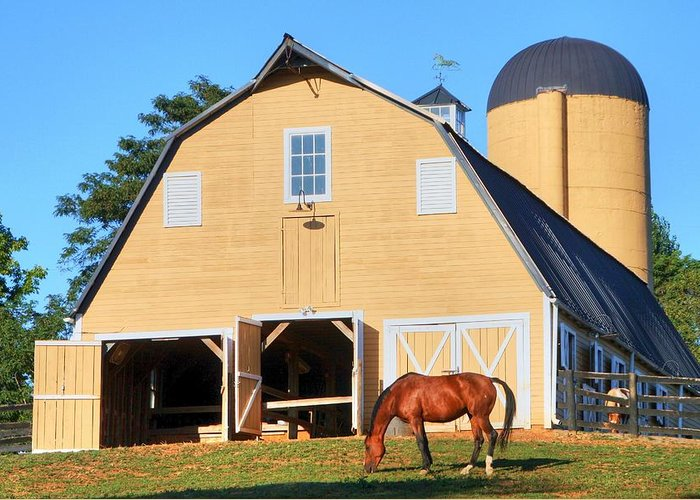 Farm Greeting Card featuring the photograph Farm by Mitch Cat