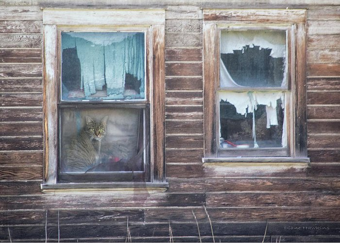 Window Greeting Card featuring the photograph Farmhouse Cat by Diane Hawkins