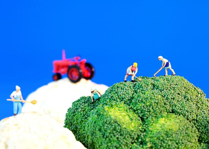 Agriculture Greeting Card featuring the photograph Farming On Broccoli And Cauliflower II by Paul Ge