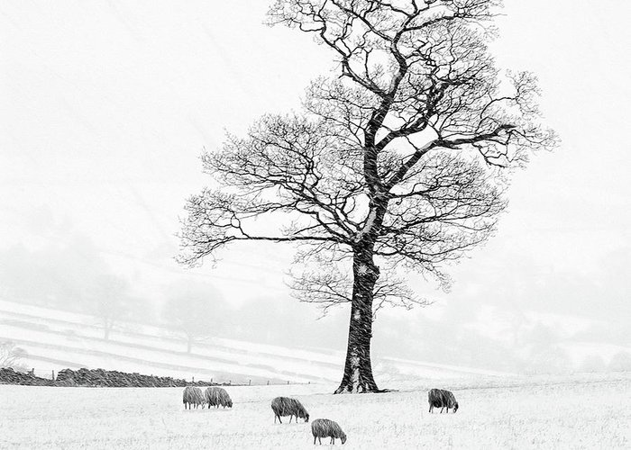Sheep In Winter Greeting Card featuring the photograph Farndale Winter by Janet Burdon