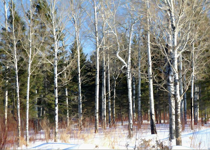 February Forest Greeting Card featuring the photograph February Bliss by Bill Morgenstern