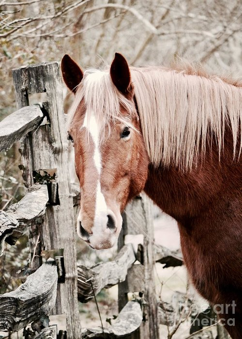 Horse Greeting Card featuring the photograph February Horse Portrait by Rachel Morrison