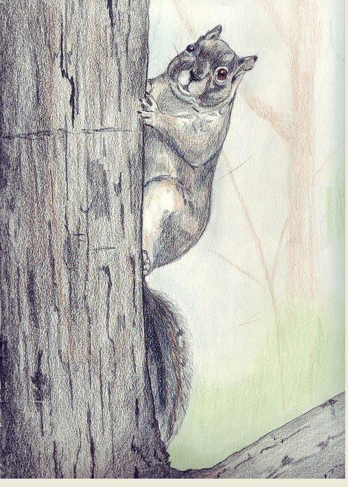 Color Pencil Greeting Card featuring the drawing Feeder Raider by Debra Sandstrom