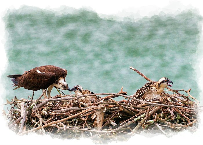 Osprey Greeting Card featuring the photograph Feeding The Little Ones by Dan Friend